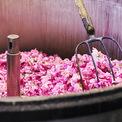 """<p class=""""Normal""""> Trung bình, một bông hoa mất 80 phút từ khi mới hái đến công đoạn xử lý trong nhà máy nằm ở phía cuối con đường nơi những bông hoa được trồng. Con rể của ông Joseph nói rằng việc này như chạy đua với thời gian để không thể làm giảm mất chất lượng của hoa và đây cũng gần như là lợi thế cạnh tranh lớn nhất của Chanel. Ảnh:<em>minimalblanc / Instagram</em></p>"""