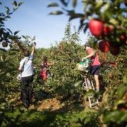 Nguy cơ giá thực phẩm thế giới leo thang vì đứt gãy chuỗi cung ứng lao động (PI)