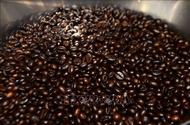 Giá cà phê Robusta xuất khẩu loại 2, 5% đen vỡ, đứng ở 1.901 USD/tấn. Ảnh minh họa: TTXVN