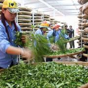 Bán 5 container chè, doanh nghiệp Việt có nguy cơ mất trắng 140.000 USD