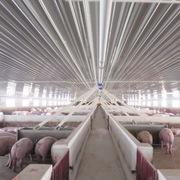 Thanh Hóa cho Dabaco thuê hơn 52 ha đất để làm khu chăn nuôi lợn giống