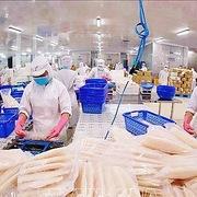 VASEP: Giãn cách đến 15/9 sẽ khiến chuỗi sản xuất thuỷ sản đứt gãy