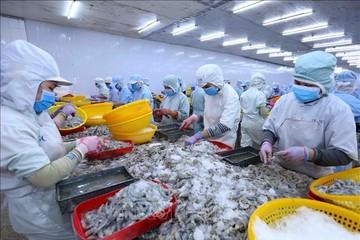 Chủ tịch Sao Ta: Đẩy mạnh chế biến thô, sẵn sàng khi tôm nguyên liệu tăng giá