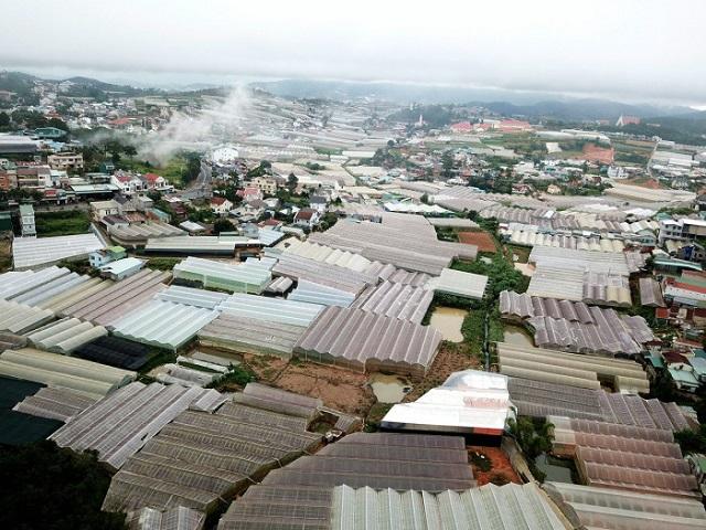 Lâm Đồng: Hàng trăm ha nhà kính xây trái phép trên đất rừng