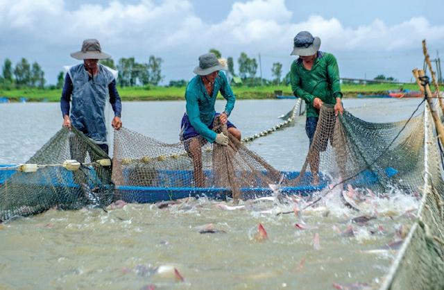 Phó Thủ tướng chỉ đạo gỡ khó hoạt động sản xuất, kinh doanh thủy sản, do dịch Covid-19 kéo dài