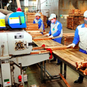 Gỡ khó cho ngành gỗ