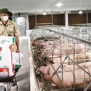 Masan MEATLife tách mảng thức ăn chăn nuôi, huy động gần 7.300 tỷ đồng trái phiếu