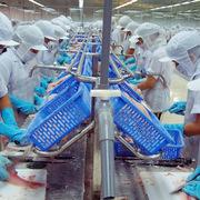 Xuất khẩu thủy sản tháng 8 sang các thị trường đều giảm mạnh