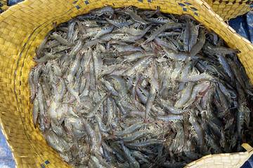 Thị trường cá tra 'đóng băng', giá tôm tiếp tục giảm