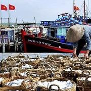 Hàng trăm tấn thủy sản bị dồn ứ ở các cảng biển Quảng Ngãi