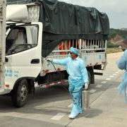 Trung Quốc tạm dừng nhập khẩu thanh long tại cầu phao Đông Hưng trong 7 ngày