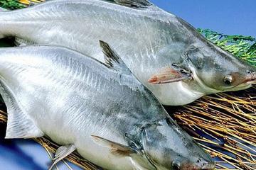 Năng suất ảnh hưởng bởi dịch bệnh, Vĩnh Hoàn báo doanh thu xuất khẩu tháng 8 giảm