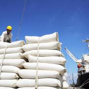 Xuất khẩu gạo sang Philippines, Trung Quốc tăng mạnh
