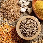 Việt Nam chi hơn 3,3 tỷ USD mua thức ăn chăn nuôi trong 8 tháng