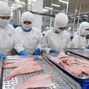 Doanh nghiệp nước ngoài mong Việt Nam sớm mở cửa