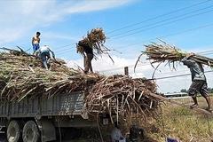 SSI Research: Thuế có thể tác động trái chiều đến TTC Sugar và Mía đường Lam Sơn
