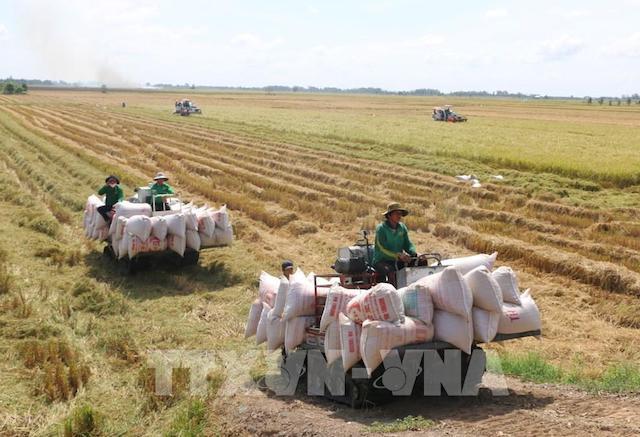 Giá gạo 5% tấm có mức tăng cao nhất, 71 đồng/kg, ở mức bình quân 9.057 đồng/kg.
