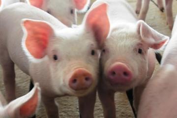 Bán nông sản lãi đột biến nửa đầu năm, một doanh nghiệp nộp hồ sơ niêm yết HoSE