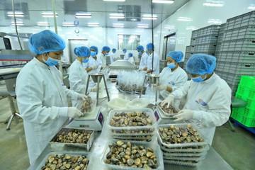 Xuất khẩu nghêu, ốc mang về hơn 72 triệu USD
