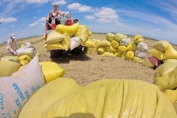 Giá gạo xuất khẩu cao nhất 2 tháng
