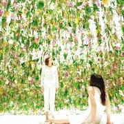 Người Nhật mãn nhãn ngắm khu vườn trong suốt 13.000 cây hoa lan