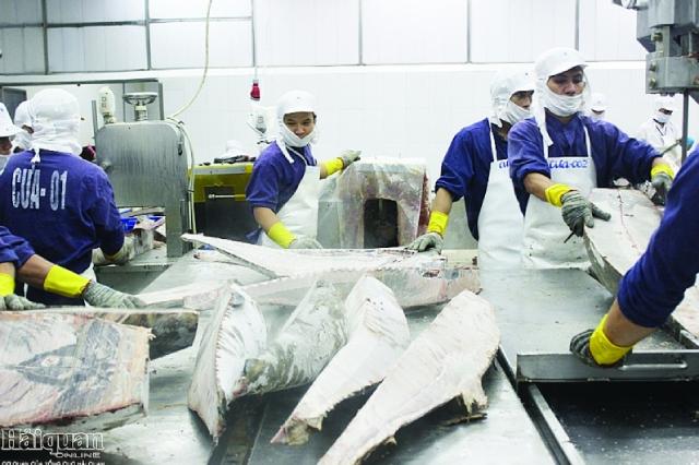 Hưởng thuế xuất khẩu 0% từ CPTPP, xuất khẩu cá ngừ sang Mexico tăng hơn 260%