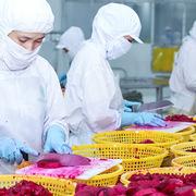 Xuất khẩu rau quả tháng 9 tăng, cắt đà sụt giảm 5 tháng liên tiếp