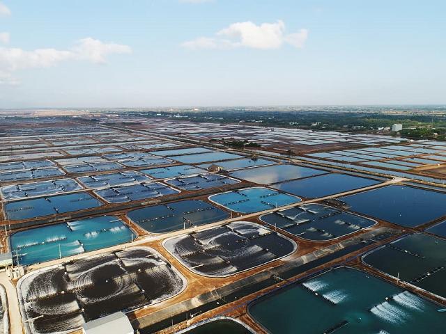 Chăn nuôi C.P Việt Nam nắm gần 17% vốn Thực phẩm Sao Ta