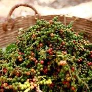 Hàn Quốc tăng thị phần nhập khẩu hạt tiêu từ Việt Nam