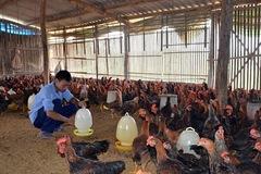 Đối mặt 2 cuộc khủng hoảng, lần đầu tiên chăn nuôi gia cầm tăng trưởng âm