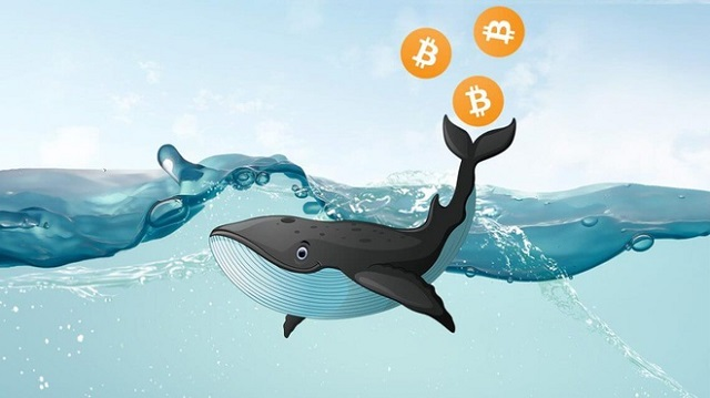 Tỷ lệ 'cá voi' nắm giữ Bitcoin cao nhất trong lịch sử