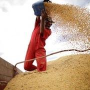 Mỹ lo ngại đậu tương Brazil 'lấn lướt' thị trường